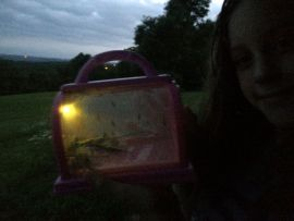 Catching Bugs in the Ozark Mountains